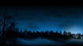 Night Forest Desktop Wallpaper For PC