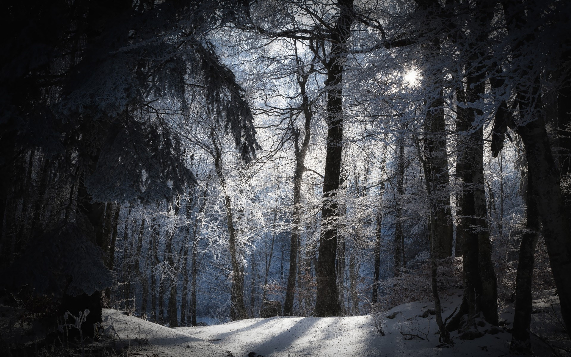 Night Forest Wallpapers High Quality | Download Free