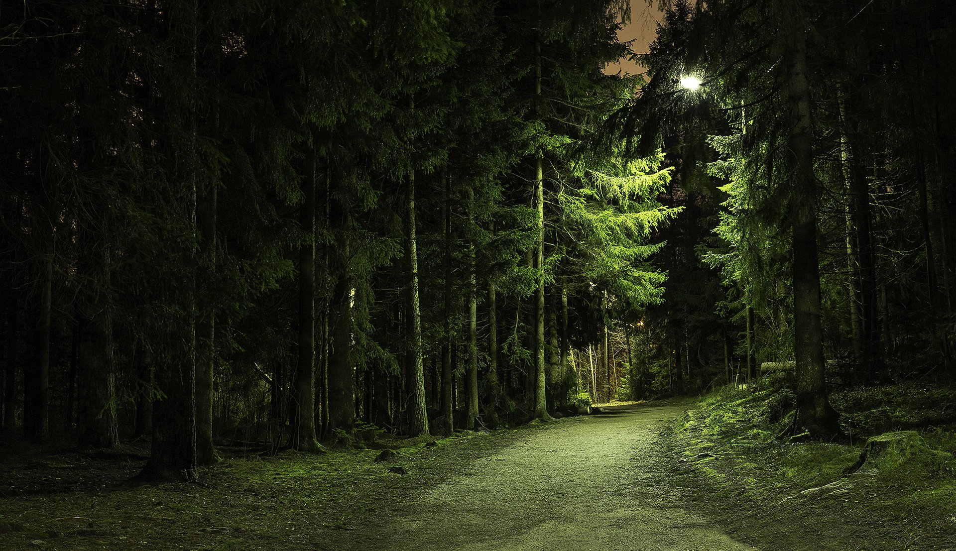 Night Forest Wallpaper...