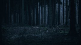 Night Forest Wallpaper Download