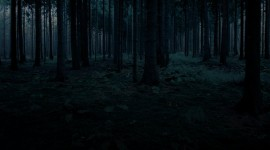 Night Forest Wallpaper Download Free