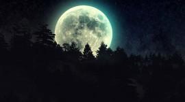 Night Forest Wallpaper For Desktop
