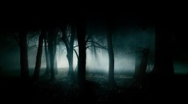 Night Forest Wallpaper Free