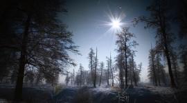 Night Forest Wallpaper Full HD