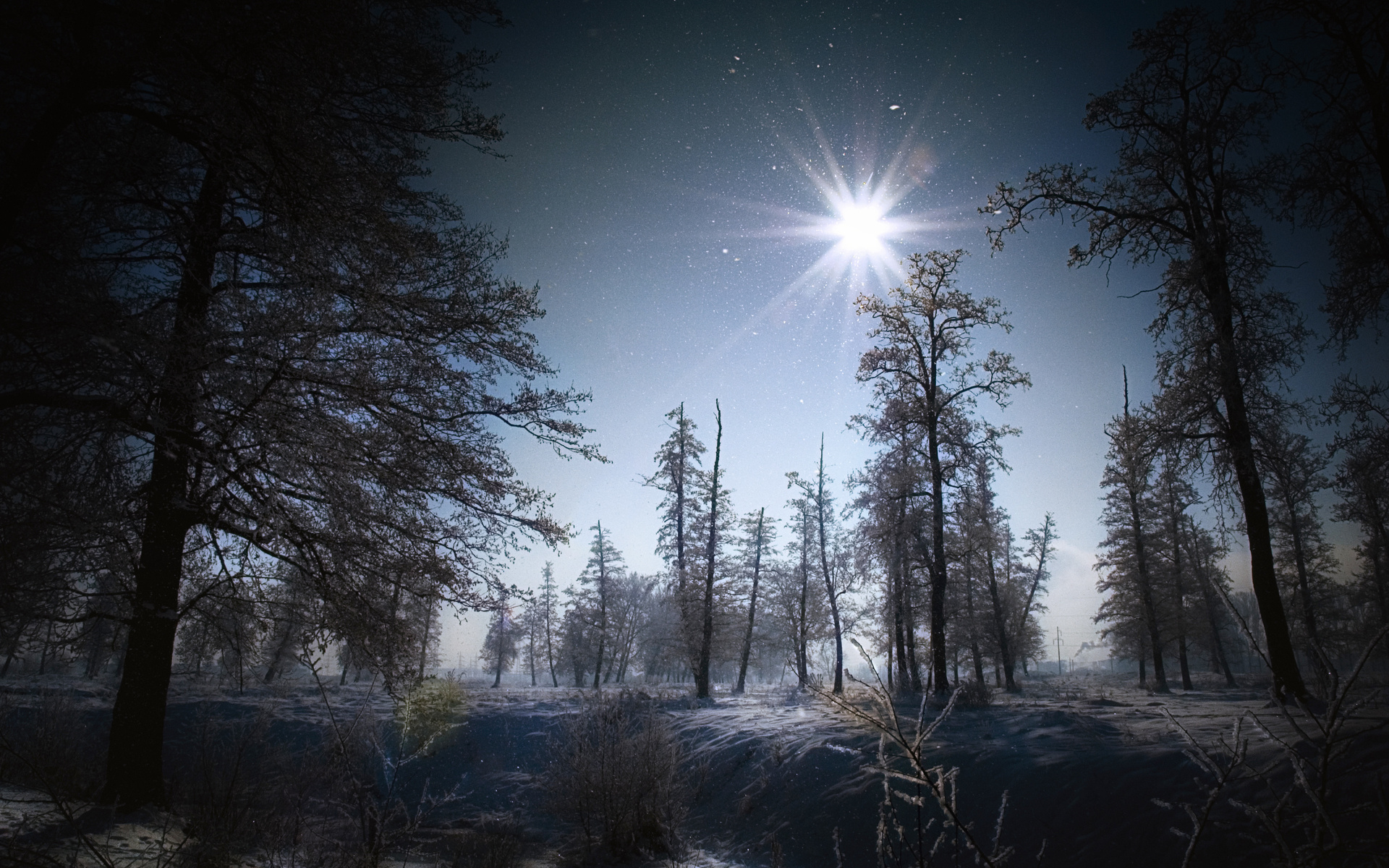 Night Forest Wallpapers High Quality Download Free