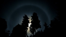 Night Forest Wallpaper High Definition