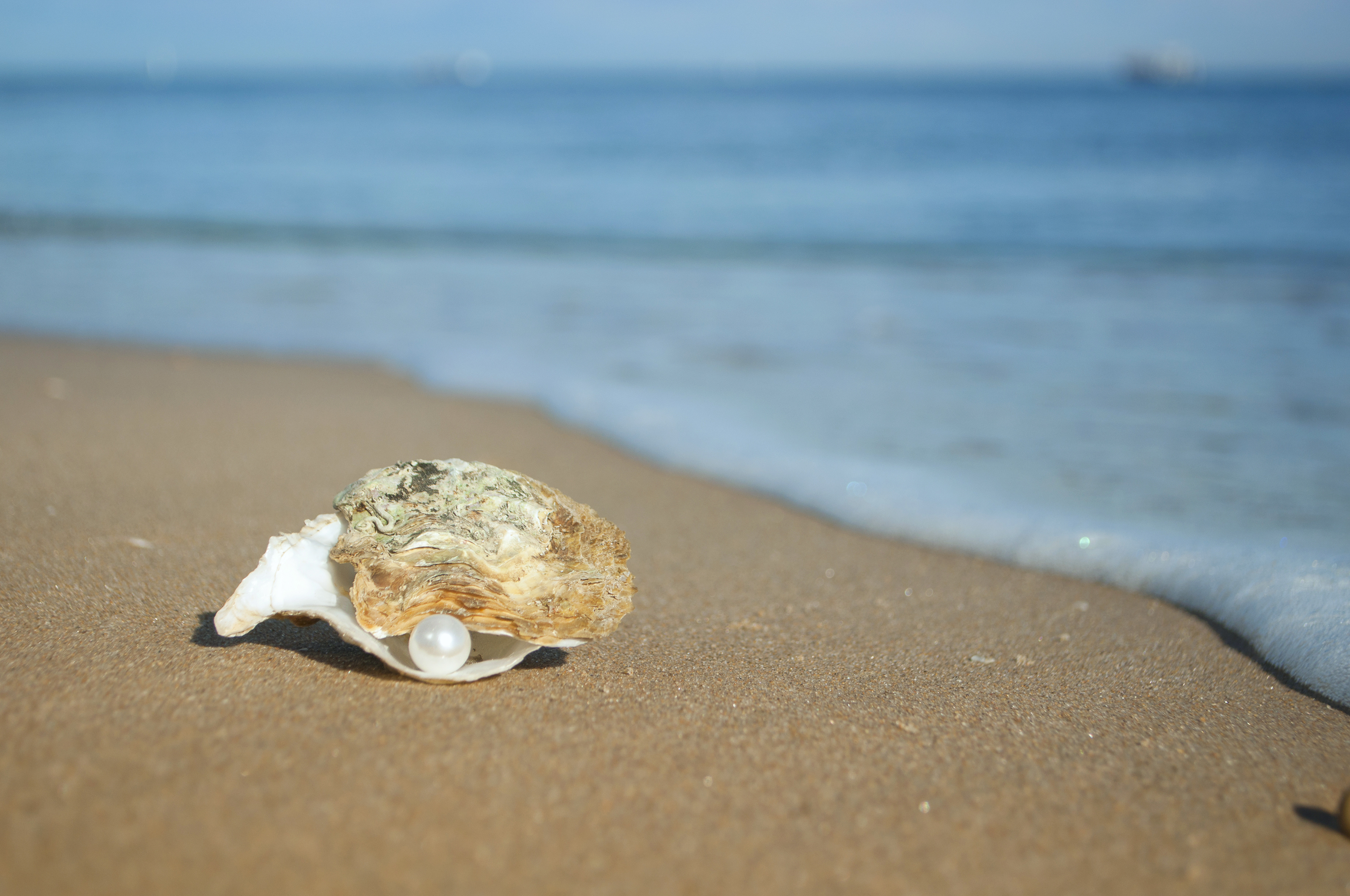 Pearl In The Shell Wallpapers High Quality | Download Free
