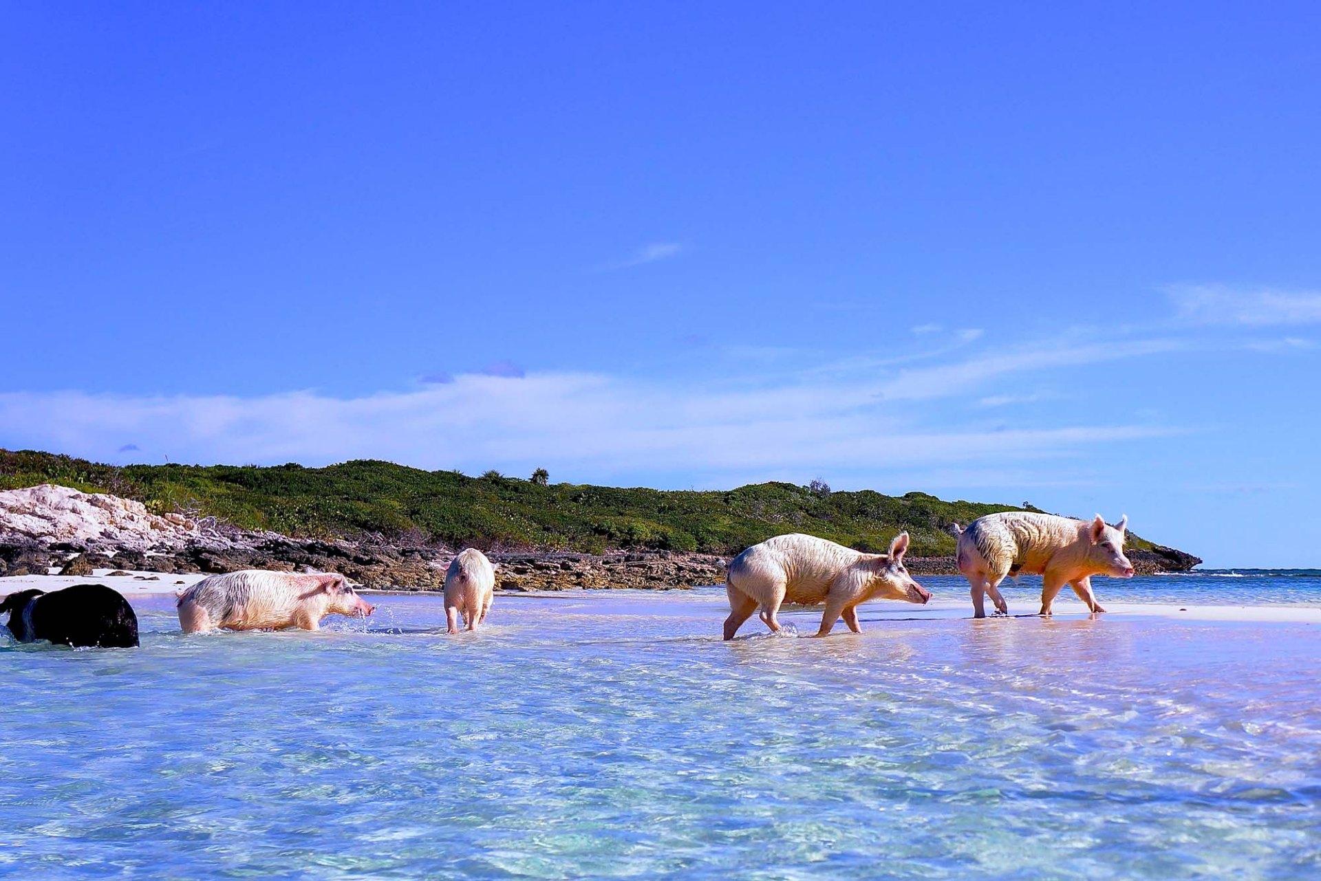 Grand Isle Resort And Spa Great Exuma Bahamas