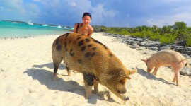 Pigs In The Bahamas Wallpaper Full HD