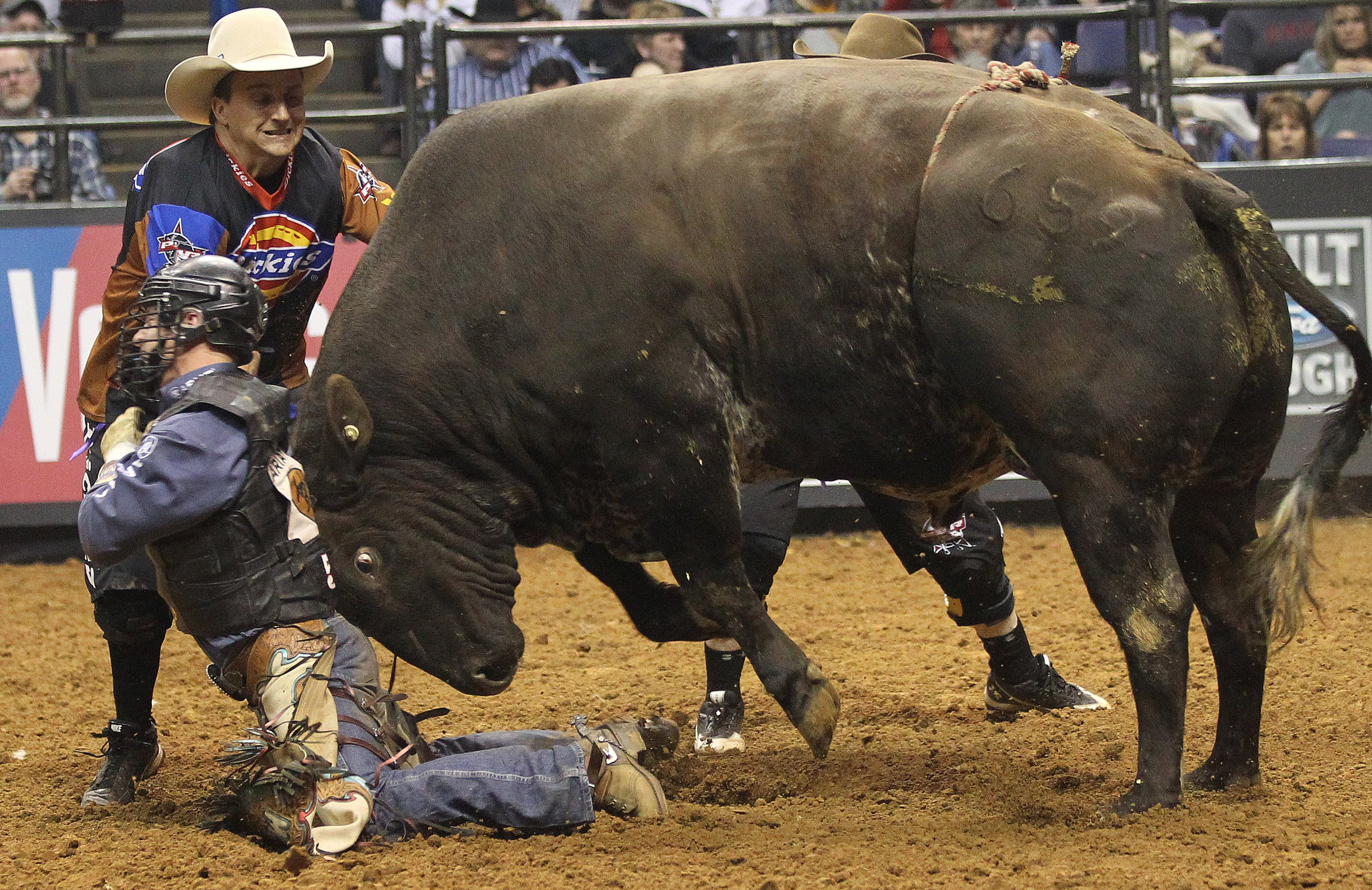 rodeo wallpapers high quality download free
