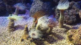 Sea Anemones Photo Download