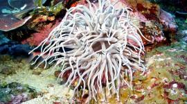 Sea Anemones Photo Free