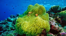 Sea Anemones Photo#2