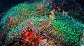 Sea Anemones Wallpaper 1080p