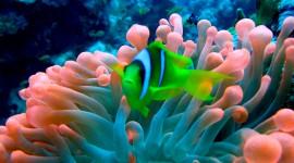 Sea Anemones Wallpaper For Desktop