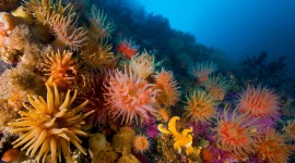 Sea Anemones Wallpaper#1