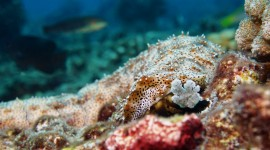 Sea Cucumbers Wallpaper Download Free