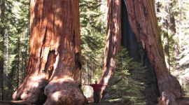 Sequoia National Park Best Wallpaper