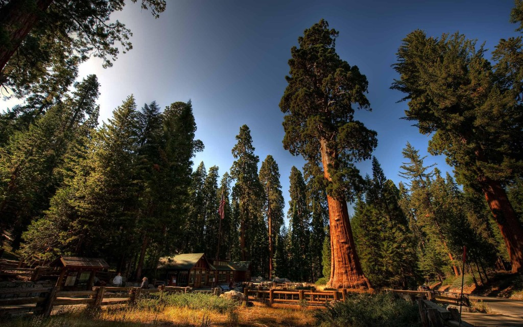 Sequoia National Park wallpapers HD