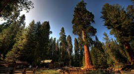 Sequoia National Park High Quality Wallpaper