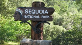 Sequoia National Park Wallpaper