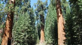 Sequoia National Park Wallpaper Download