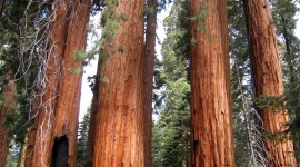 Sequoia National Park Wallpaper For Android