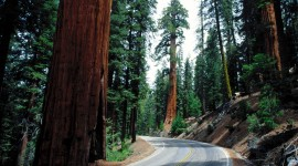 Sequoia National Park Wallpaper For Desktop