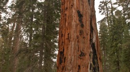 Sequoia National Park Wallpaper For IPhone