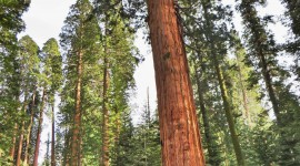 Sequoia National Park Wallpaper For IPhone Free