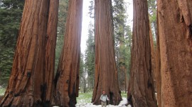 Sequoia National Park Wallpaper Free