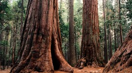 Sequoia National Park Wallpaper HQ