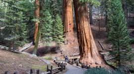 Sequoia National Park Wallpaper High Definition