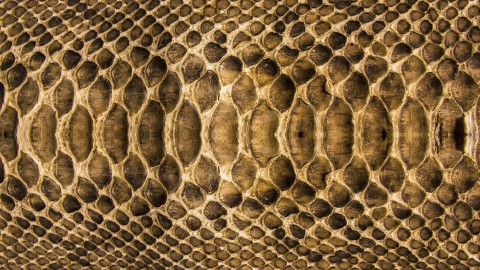Snake Skin wallpapers high quality