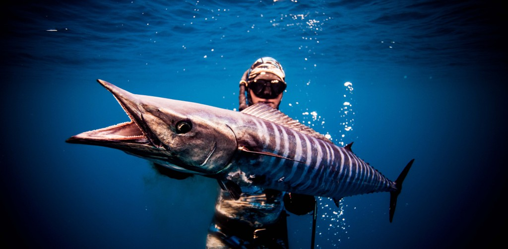 Spear Fishing Wallpapers High Quality Download Free