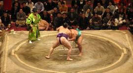 Sumo Wrestler Photo