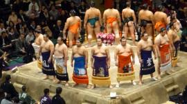 Sumo Wrestler Pics