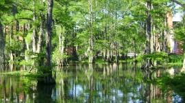 Swamp Best Wallpaper