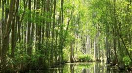 Swamp Desktop Wallpaper