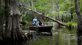 Swamp Wallpaper Download