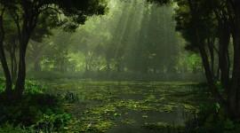 Swamp Wallpaper Download Free