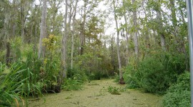 Swamp Wallpaper For PC