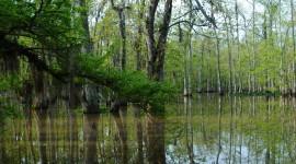 Swamp Wallpaper Free