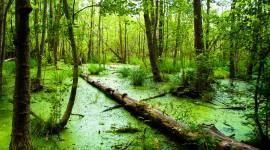 Swamp Wallpaper Full HD