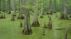 Swamp Wallpaper High Definition