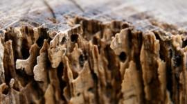 Termites High Quality Wallpaper