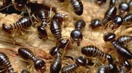 Termites Wallpaper 1080p