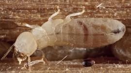 Termites Wallpaper Download Free