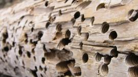Termites Wallpaper For Desktop