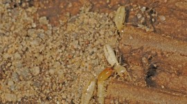 Termites Wallpaper Full HD